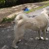 風薫る5月は犬も猫も抜け毛の季節です。