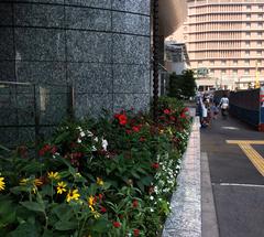 ★大阪駅前の花壇