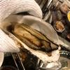 出張牡蠣小屋「牡蠣奉行」イオン小山店の冬のイベントになりつつある?