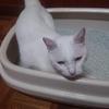 猫砂をかえると喜ぶ猫