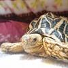 リクガメ じょーたろーの世界亀の日