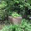 自然が作ったみごとな石附盆栽