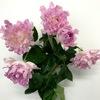 何だこれ?変なバラに遭遇しました。変わった花びらのバラに興味津々。