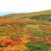 「紅葉の絨毯が見ごろ」栗駒山登山
