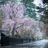 角館武家屋敷通りの桜 角館紀行開花情報ブログに載ってた(雑談)