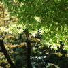 新緑眩しい『東京小石川後楽園』