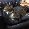 🐈最近の我家の王子様「猫のノア君」の様子🐈