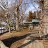 若宮八幡宮のケヤキ(茨城県常陸太田市)