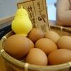 【일품 계란 요리】계란과 밥