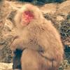 お猿の温泉「地獄谷野猿公苑」に行ってきた