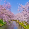 平成最後の桜旅@弘前