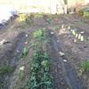 いよいよ3月菜園シーズン突入!!その前に畑の見回り!