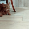 猫嫌いをも魅了する猫の癒し力