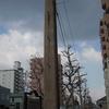 函館市が2年連続で・・『市区町村 魅力度ランキング』 第1位