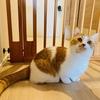 愛猫の幸せを守る!わがやのヒーローはペットゲート