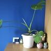 観葉植物一択。面倒臭がりのインテリア事情。運気のバロメーターを育てよう。