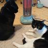 今日の黒猫モモ&白黒猫ナナの動画ー868