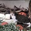 今日の景色 11/25 猫、十月桜