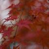 紅葉を近場で幻想的に撮った