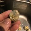 うずらの有精卵を温めてバロットを作った!