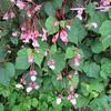 まつこのピンク色の庭