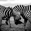 【写真複製・写真修復の専門店】白黒写真の色付け加工