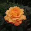 2012/05/08 アンネの想い出開花