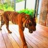 天気が良ければ眺めも最高!オーストラリアの動物園タロンガ・ズーを満喫!