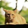 猫の目は美しい