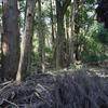 カブトムシの木、カブトムシおす、カブトムシめす、カブトムシ見つけた。