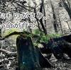 屋久島の森が教えてくれたこと その2 老いたものがさり、新しい命が育つ