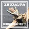 【令和最初の増種】エラフスホソアカクワガタ成虫飼育開始のお知らせ【観賞用・ブリード無し】