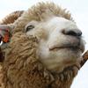 【酔っ払いの雑談】眠れない時は羊なんか数えてないで愛しのあの子との添い寝の時間を数えよう!