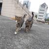 9月後半の #ねこ #cat #猫 その2