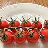 ミニトマト【鈴なりトマト】のお味は?