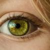 目に関する新技
