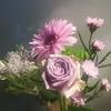 花を求めて、コロナが拡大する中での散歩