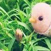 撫子のつぼみと小鳥の会話♪