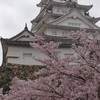 桜の魅力🌸木の気を感じる。老木の桜