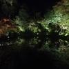 【秋の夜間特別拝観】ライトアップした夜の高台寺を見に行った!ー2018年10月ー
