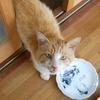 ノラ母猫ブチさんから『アヴェ・マリア』の調べが聞こえる。