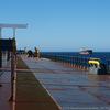 バルカー乗船記番外編(2018年8月)オーストラリア錨地のカモメたち