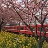 【横浜から45分】三浦海岸の河津桜が満開だったので見に行ってきた!