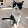 猫猫強化週間~通院とトライアル、不妊手術に向けて~