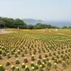 能古島へ行ったお話。