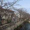 名古屋でサクラ開花宣言 2020.3.22