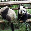 四川のメインイベントはやっぱりパンダ!パンダ基地でパンダ三昧だ!