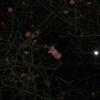 【0円筋トレ記録】百花の魁