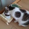#634 食事台使ってくれました!と猫用コタツの時期【猫】