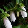 嵯峨野の花とネコジャラシ